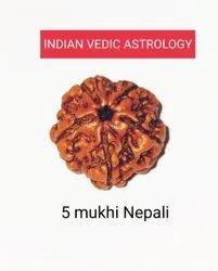 5 Mukhi Rudraksha