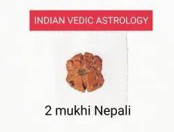 2 Mukhi Rudraksha Nepali