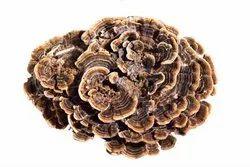 Brown Yellow Turkey Tail Mushroom Extract, Packaging Type: Drum, Packaging Size: 25 Kg
