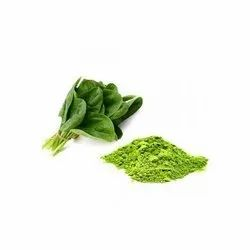 Green Organic Spinach Powder, Packaging Type: Drum, Packaging Size: 25 Kg