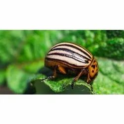 Organic Products For Insect Management