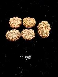 11 Mukhi Rudhraksha