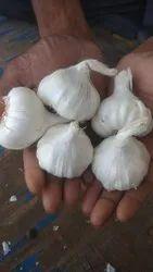 A Grade Utti Big Garlic, Packaging Size: 50 Kg