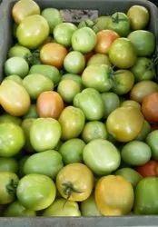 A Grade Fresh Green Tomato for Export purpose, Carton