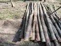 Brown Round 12 Feet Eucalyptus Wood Pole