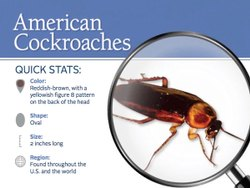 Cockroaches Management Service