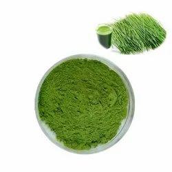 Green Barley Grass Powder, 25 Kg
