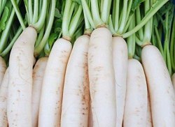 Organic Plant from Ceylon 2g White Radish Seeds