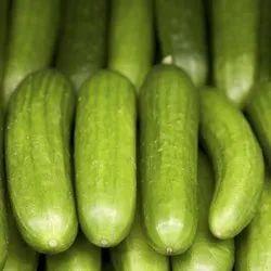 Green A Grade Fresh Cucumber, Carton