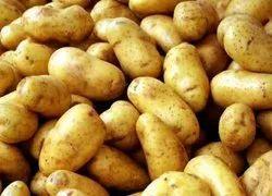 A Grade Fresh Potato, Crate, Packaging Size: 10 Kg