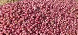 A Grade Red Nasik Onion, Packaging Size: 50 Kg, Onion Size Available: Large