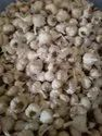 A Grade Desi Garlic 25 Mm, Packaging Size: 50 Kg
