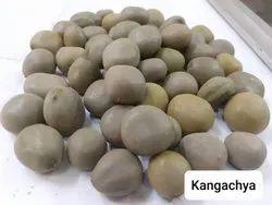 Natural Kangachya Seeds, For Ayurvedic, Packaging Size: 5 Kg