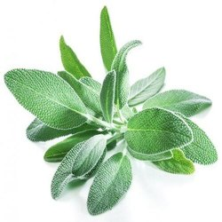 A Grade Green Sage, Gunny Bag, 5 Kg