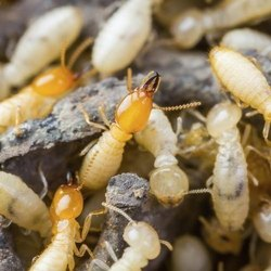 One Time Residential Termite Control Services