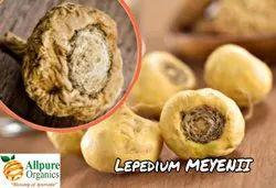 Lepidium Meyenii Extract, Packaging Type: 25 kg hdpe drum