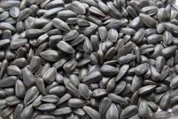 Dried Black B Grade Sunflower Seeds, For Oil Making, Packaging Type: Loose
