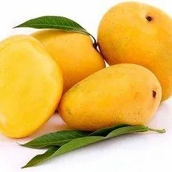 Devgad Hapus Mango