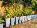 Tulip - 60 Pots & Planters