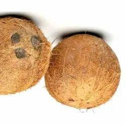 A Grade Solid Fresh Mature Coconut, Coconut Size: Medium