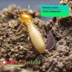 Commercial Anti Termite Treatment Service, Bangalore