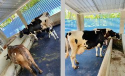 Cow Mat Stable Mat In Chennai
