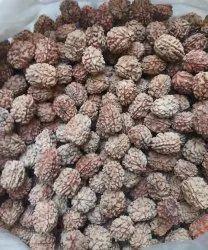Natural Bhadraksh Seeds, For Agriculture