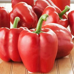 A Grade Fresh Red Bell Pepper, Packaging Size: 10 Kg