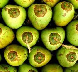 A Grade Solid Green Tender Coconut, Coconut Size: Medium