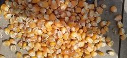 NON BRANDED Yellow maize, High in Protein