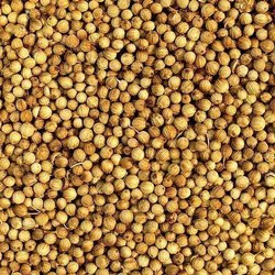 Coriander Seeds - Golden