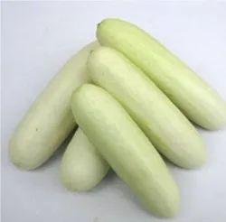 A Grade White Fresh Cucumber, Gunny Bag, Packaging Size: 10 Kg