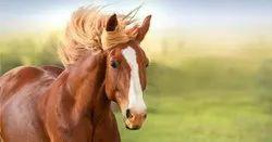 Animal Genetic Disorders Genotyping
