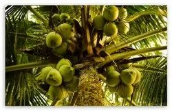 AGRI LAND FOR SALE IN METTUPALAYAM