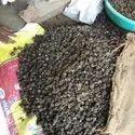 25 Kg Timur Seed