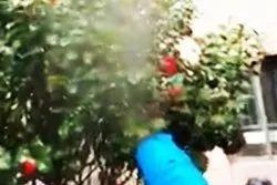 Mist Blower Sprayer