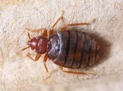 Home Spray Bed Bugs Pest Control