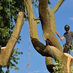 Anywhere Tree Demolition Services