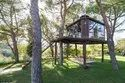 Tree Wooden House