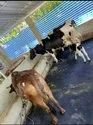Cow Shed Non Slip Mat In Chennai