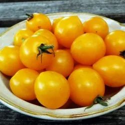 A Grade Yellow Cherry Tomato, Packaging Size: 10 Kg