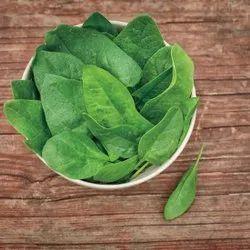 A Grade Maharashtra Fresh Baby Spinach Leaves, 10 Kg
