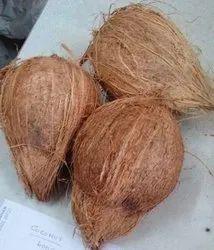 A Grade Solid Fully Husked Coconut, Coconut Size: Medium
