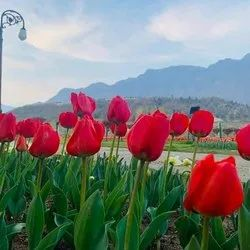 2 Kashmir Luxury Honeymoon Tour Package For Couples