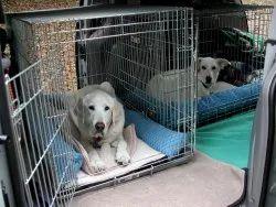 Pet Transportation Services