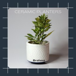 White Decorative Pot Ceramic Flower Pot by Brahmz