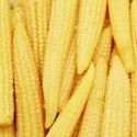 A Grade Yellow Baby Corn, Packaging Type: Carton, Packaging Size: 10 Kg