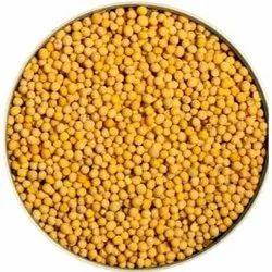 50 Mustard Seeds Yellow Sarson