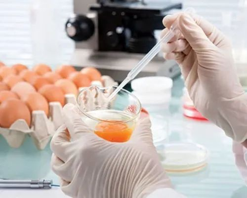 Food Quality Testing Services in Sahibabad, Ghaziabad   ID: 23325268088