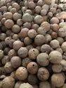 Oak Gallnut / Quercus SPP